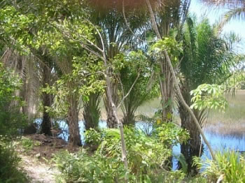 Pousada Jardim Cambui